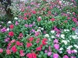 中央公園で見つけた花